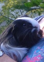 Humphrey having a small cuddle