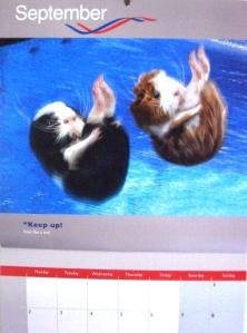 (c) Guinea Pig Games