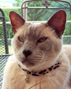 PICT Max 1 portrait
